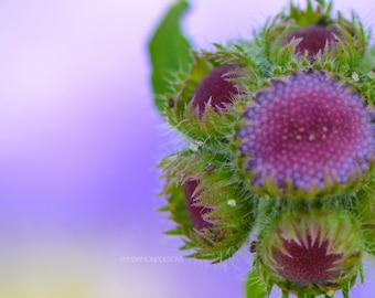 Violet Purple Flower Photograph, Fine Art Photography, Macro Photography, Floral Decor, Flower Photography, Flower Poster, Purple Decor