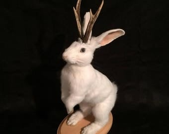 All white jackalope taxidermy