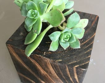 Small Wood Cube Succulent Planter