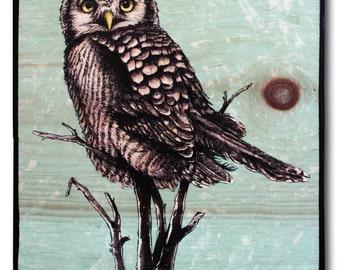 "Owl, Northern Hawk Owl, Print on wood, 11.25 x 9.5"", turquoise, home decor, wall art, Owl print on wood"