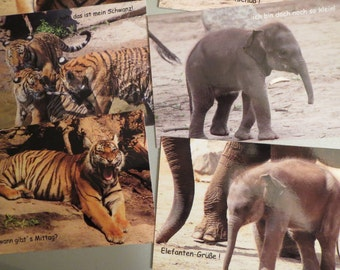 Postcards Tiger, elephant, post card set 6 piece Unikate-with individual spells with post cards printed to send