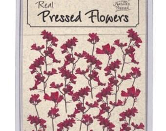 Coral Bells 25 flowers SALE