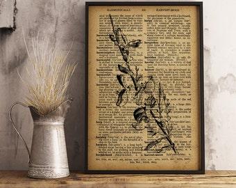 Common Broom Dictionary Art Print, Botanical Art Decor, Flowers Illustration, Botanical Wall Art, Floral Botanical Vintage Print (F11)