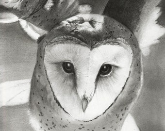 "Barn Owl ""Forward"" Tyto alba Raptor Bird Original Drawing Print"