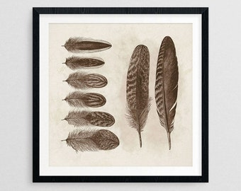 Feathers I- Country Decor- Country Gifts- Primitive Gifts- Prints for Decor- Primitive Art- Wildlife Art -Feathers -Birds -Boho -Eclectic