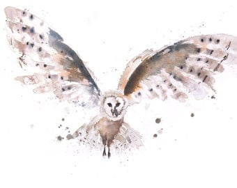 Owl no.1 - Signed limited Edition Print