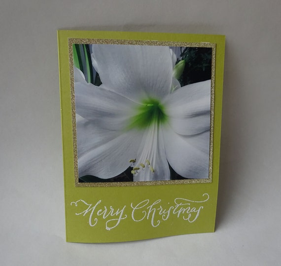 Christmas Card - Handmade Photo Card with a White Amaryllis Flower - #1113