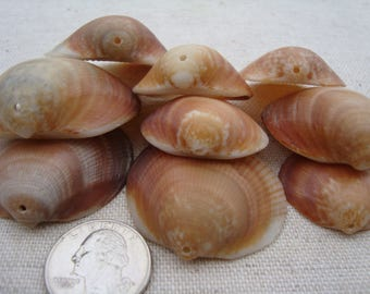 Perforated shells-italian top drilled sea shells-supplies-supplies for crafts-jewelry supplies-clams