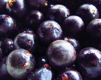 Organic Acai Berry Oil UNREFINED Cold Pressed Carrier Oil, Organic Anti-aging Acai Berry Facial Oil, Antioxidant Acai Facial Serum, Body Oil