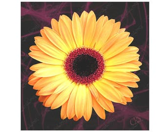 Greetings Card Gerbera
