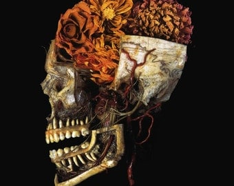 Antique Medical Colour Photograph Of Skull & Dahlias Still Life A3 Re Print