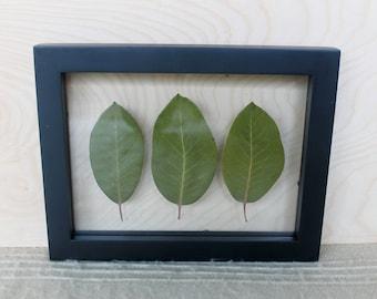 Real Pressed Leaf Botanical Art | Black Float Frame | Northwest Decor Gift | Framed Pressed Plant Wall Hanging | Green Woodsy Home Decor