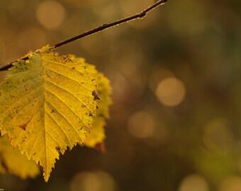 Autumn leaf - Macro photo - Autumn - Nature photo - Photography - Art photo - Colors photo - Leaf- Autumn photography