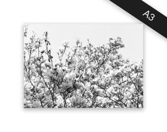 Flowers - art print/photo print A3