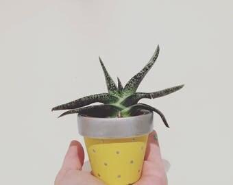 Silver & Yellow plant pot