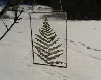 Frame glass fern