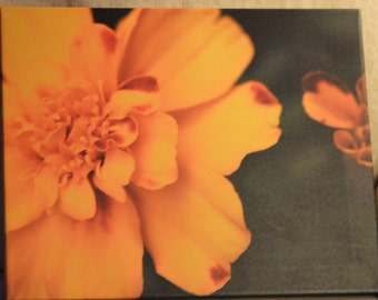 16x20 Marigold photo canvas print