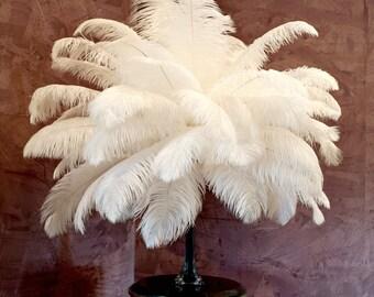 """OP25LB - Bulk Ostrich Femina Feathers 17-25"""" PER 1/4LB"""