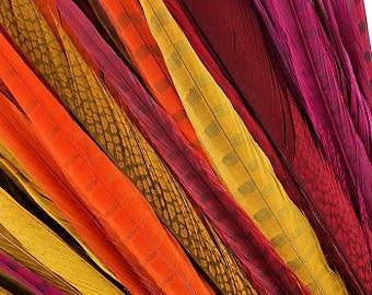 Dyed Ringneck and Golden Pheasant Tail Feathers 25pc/pkg - Assorted Colors