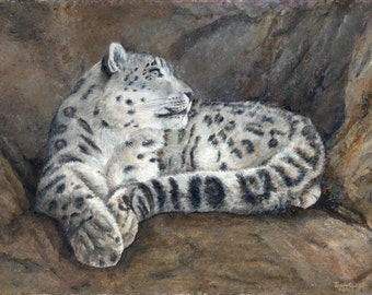 "Snow Leopard - Limited Edition Print 16"" x 20"""