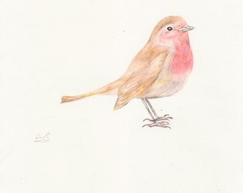 Robin Pencil Drawing Art Print