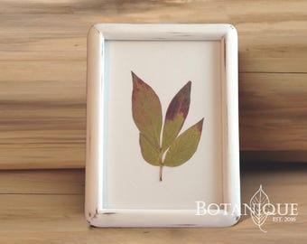 Peony leaf in distressed vintage wood frame