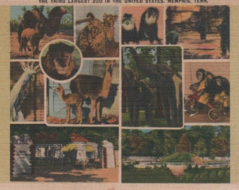 """The Third Largest Zoo Memphis Tenn. 3 1/2"""""""" X 5 1/2"""" Used Linen Post Card"""