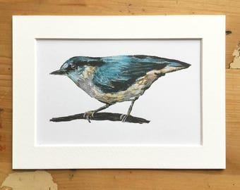 Nuthatch // Bird Illustration // Art Print
