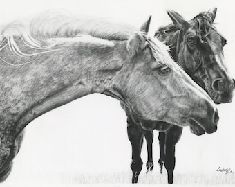 "Horse drawing in charcoal ""Shannon"" 18x24"