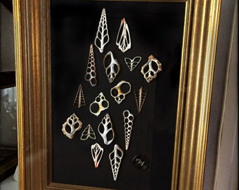 Frame with slices of shells