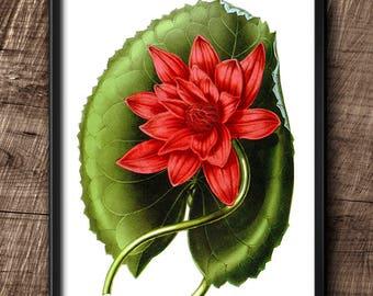 Water Lily · Instant Download · Flower · Vintage · Printable · Digital File #75