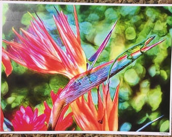 BIRD OF PARADISE pink graphic art print