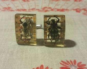 Rare Vintage Real Bumblebee Cufflinks