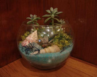 Terrarium, plants, beach, gifts for him