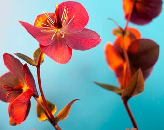 tiny flowers. #3