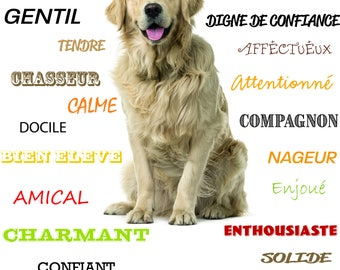 Show GOLDEN RETRIEVER - dog - dog - poster - features - character - gift - customizable - customizable - breed - breed - fun