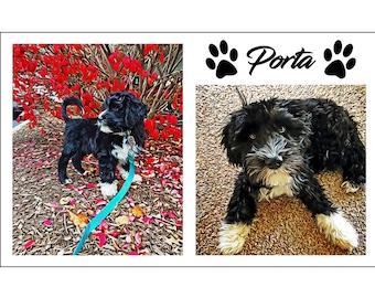 2 in 1 Digital Painting Pet Portrait