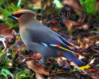 Boho Electric - INSTANT DOWNLOAD - Bohemian Waxwing