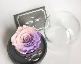 Preserved Rose Preserved Flower Preserved Red Rose in Music Box Valentine's Day Gift