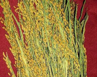 Dried Rice Bunch |  Rice Bundle | Dried Plants