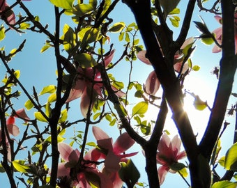 Through the Magnolias - Blank Greetings Card
