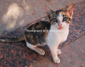 Beautiful innocent eyed cat from Kitchener's Island