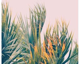 Nature Photograph- Palm Tree Print - Tropical Art - Travel Photograph - Sun Kissed - Fine Art Print- California Print - Florida Art Print