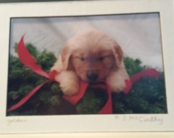 441 17a 5x7 Matted  Golden Retriever Christmas Signed Photography Photograph Print Winter Christmas Holiday
