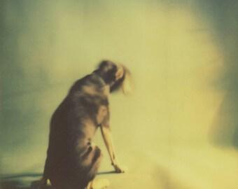 Dreamy Dog print