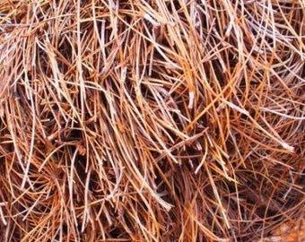 Pine Needles - Fireplace Starters, Craft Supplies, Pine Tree Needles, Holiday Pine Needles