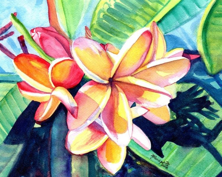 kauai plumeria print 8x10 from hawaii tropical flowers kauai