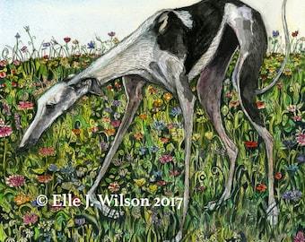 Galgo Greyhound  DOG -  Art Print