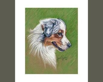 Australian Shepherd Fine Art 8x10 Print