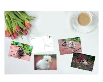Postcard set, art postcards, postcard prints, chicken print, chicken card, gifts for chicken lovers, chicken accessories, postcard display